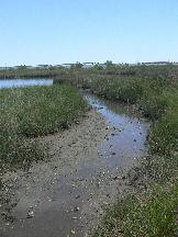 Louisiana salt marsh